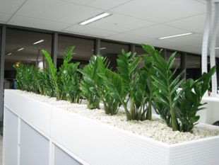 Planter Boxes For Hire Sydney Buildings Hotels Amp Offices